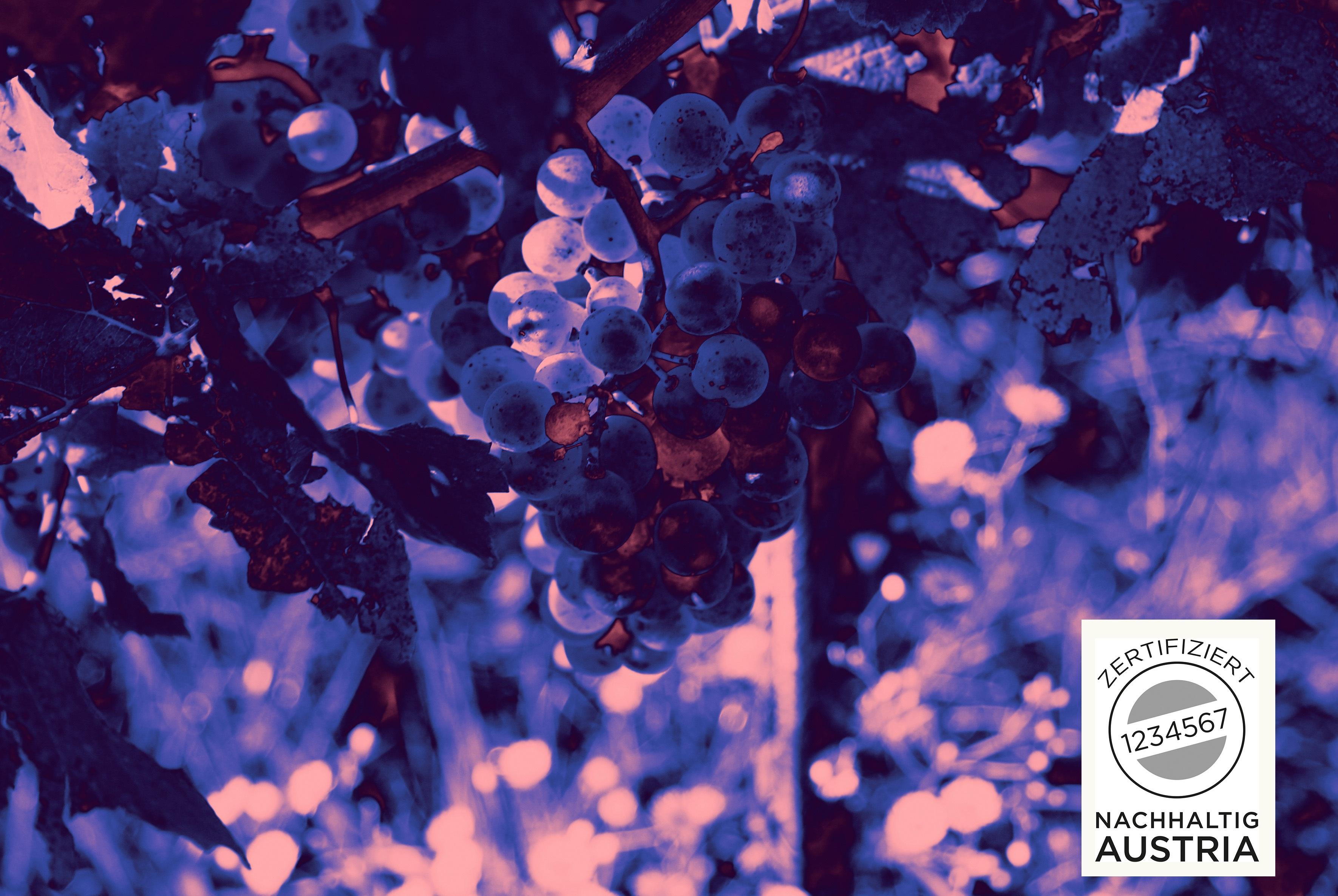 Nachhaltig Austria Weingut Payr RGB 03 Kopie